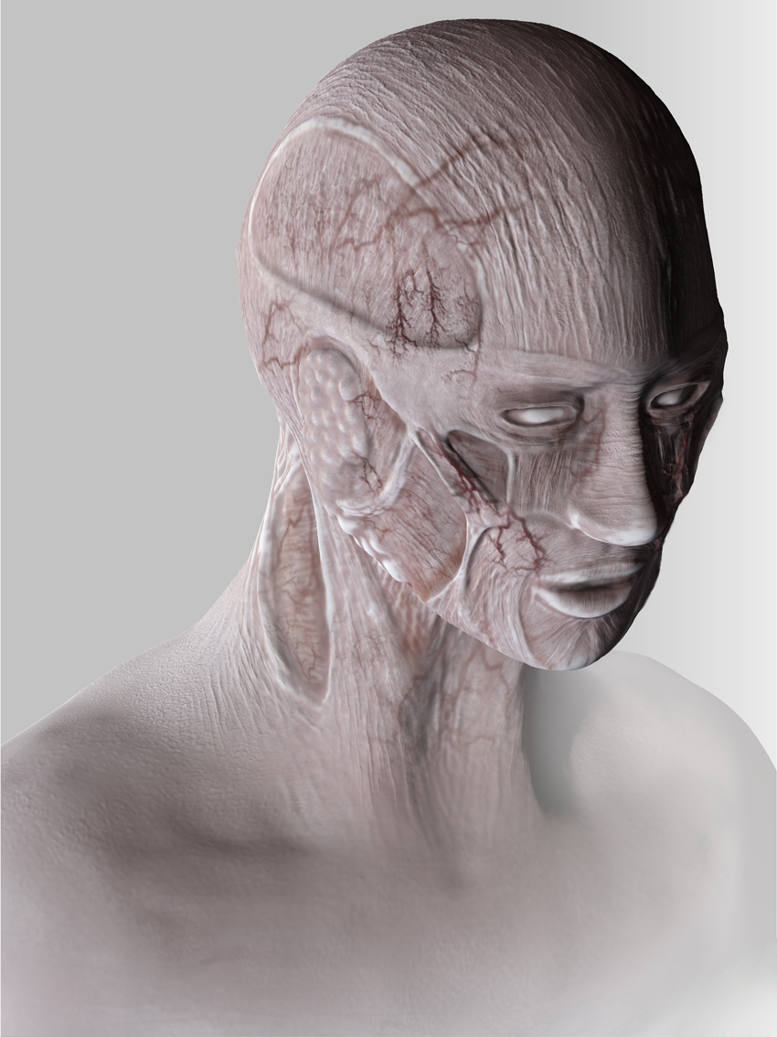 anatomiehead6isisis